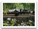 20--Kunming--musique-au-parc.jpg