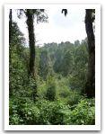 Nepal_2013_(36).jpg