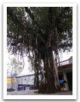 Nepal_2013_(22).jpg