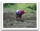 Nepal_2013_(71).jpg