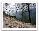 Nepal_2013_(68).jpg