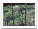 Nepal_2013_(43).jpg
