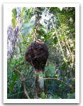 10._AMAZONIE_RESERVE_TAMBOPATA_PUERTO_MALDONADO__(93).jpg