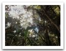 10._AMAZONIE_RESERVE_TAMBOPATA_PUERTO_MALDONADO__(25).jpg