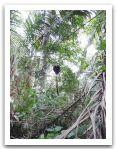 10._AMAZONIE_RESERVE_TAMBOPATA_PUERTO_MALDONADO__(81).jpg
