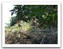 10._AMAZONIE_RESERVE_TAMBOPATA_PUERTO_MALDONADO__(314).jpg