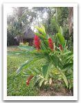10._AMAZONIE_RESERVE_TAMBOPATA_PUERTO_MALDONADO__(362).jpg