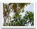 10._AMAZONIE_RESERVE_TAMBOPATA_PUERTO_MALDONADO__(282).jpg