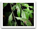 10._AMAZONIE_RESERVE_TAMBOPATA_PUERTO_MALDONADO__(203).jpg
