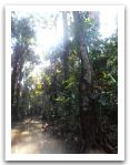 10._AMAZONIE_RESERVE_TAMBOPATA_PUERTO_MALDONADO__(107).jpg