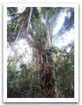 10._AMAZONIE_RESERVE_TAMBOPATA_PUERTO_MALDONADO__(67).jpg