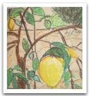 030 citron.jpg